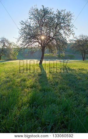 Spring; Trees; White Color; Village;