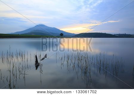 Alone tree and mountain reflection in lake