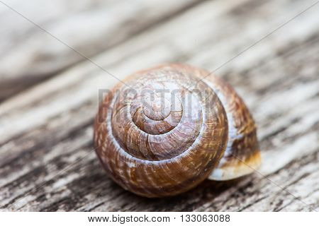 spiral snail shell on wooden surface background