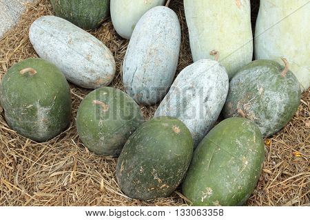Wax Gourd isolated on white color background