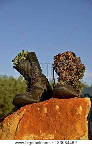A pair of black Army combat boots  resting on a rock are decorated with pine cones.