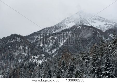 View of Alps mountain peaks covered by clouds and snow under overcast sky with conifer trees in the foreground