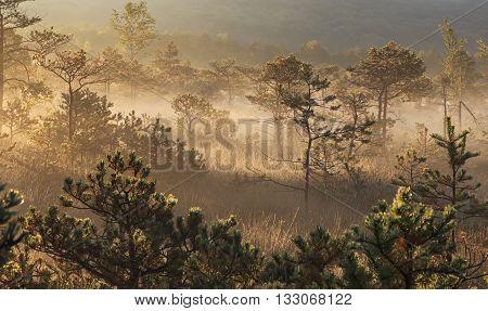 Misty morning sunrise between the marsh's trees