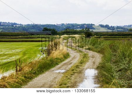 Road Between Rice Fields