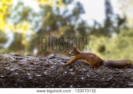 Young  Squirrel On A Tree In The Park