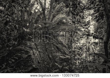 Trees and ferns in tropical jungle. Sri Lanka