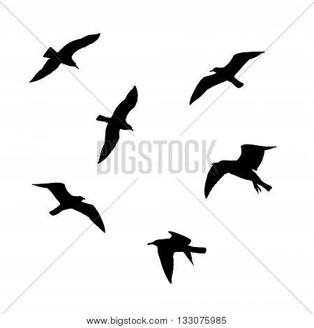 Set of flying seagulls silhouettes isolated on white background