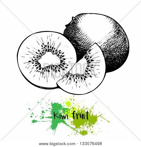 Vector illustration of kiwi fruit. Isolated on white background.Engraving summer fresh vegetarian fresh fruit. Hand drawn engraving art. For cocktail smoothie desserts and salsds.