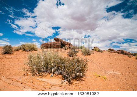 Sparse Arizona Desert