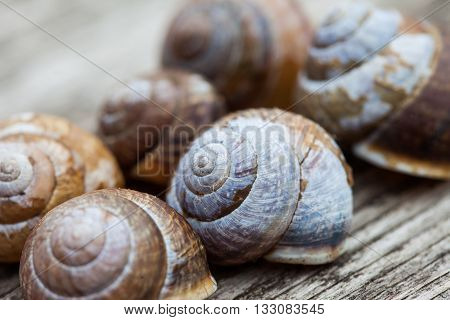 snail shells close up on wooded plank