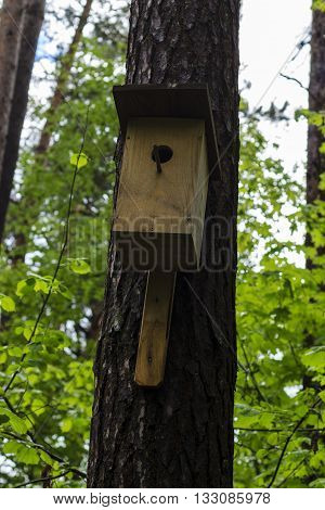 birdhouse on the pine tree at forest