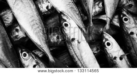 School of fish caught.