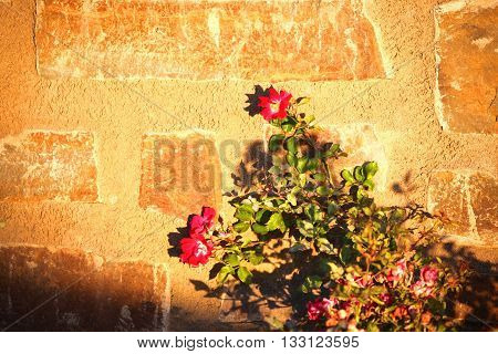 flowers are standing against wall during sunset.