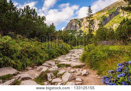 Rocky Hiking Trail in the Mountains on Sunny Day. Mlynicka Valley High Tatra Slovakia.