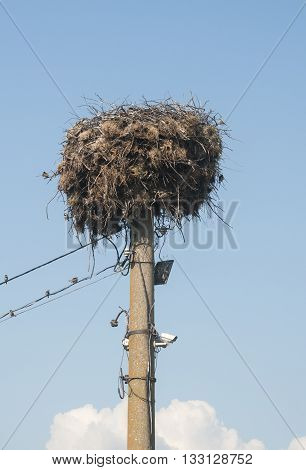 Stork nest done on power pole on blue sky background