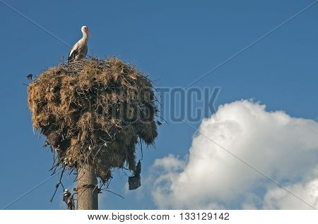 Stork on stork nest done on power pole on blue sky background