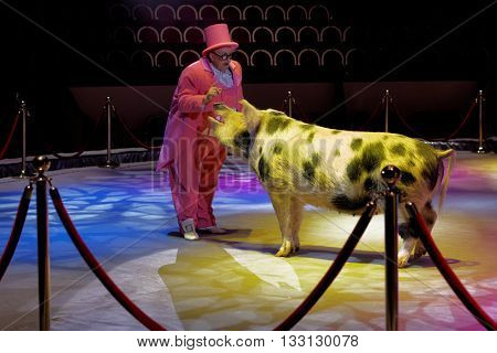 ST. PETERSBURG, RUSSIA - JUNE 2, 2016: Trained pig and a clown in the dress rehearsal of the Show of Water, Fire, And Light in the Ciniselli circus. This new show first time arrived in St. Petersburg