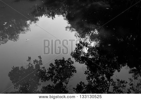 Black and white shot of a lake with reflections of the sky and trees. Leafs can be seen floating and making little waves.