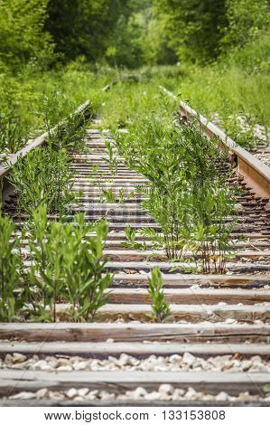 Old abandoned railroad goes away into the distance through a thick forest