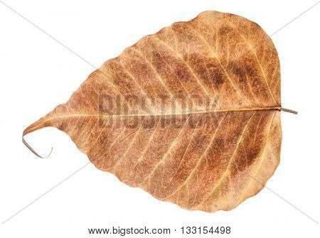 Leaf heart shape isolated on white background with clipping path
