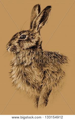 Sketch - Rabbit on brown background. Detailed pencil drawing