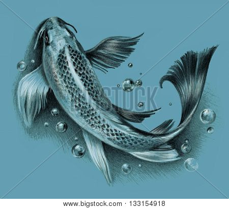 Sketch - Japanese koi fish isolated on a blue