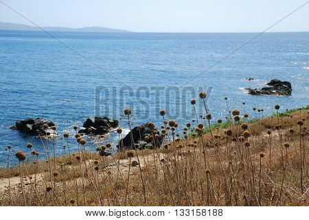 Buckwheat dry grass and the sea. A beautiful day on Corsica Island France