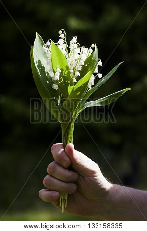 a bouquet of lily of the valley in a hand