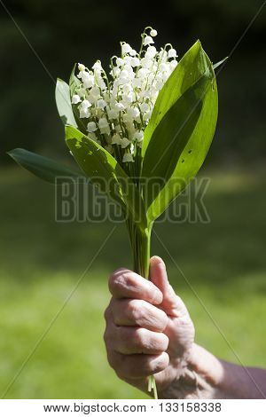 bouquet of lily of the valley in a hand