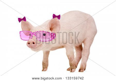 Young Pig wearing sunglasses, isolated on white