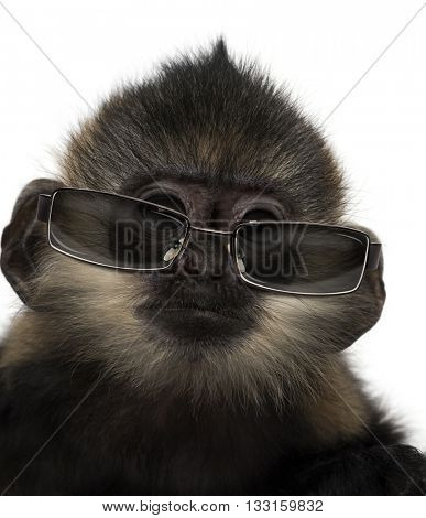 Close-up of a baby Francois Langur wearing sunglasses, isolated on white