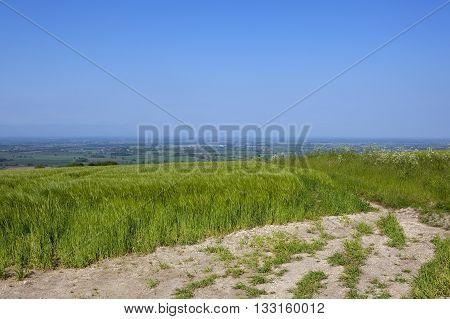 Hillside Barley Fields