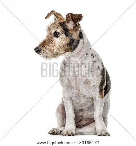 Crossbreed dog sitting and looking away, isolated on white