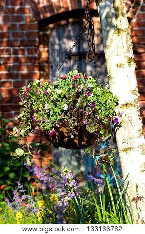 A Hanging Flower Basket In The Garden.