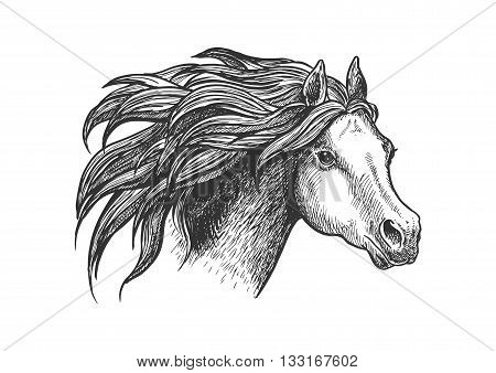 Sketch of vigorous and graceful running horse vintage engraving stylized icon of appaloosa mare with airy flowing mane. Use as horse breeding industry symbol or equestrian club design