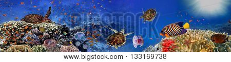 Underwater panorama with turtle coral reef and fishes. Red Sea Egypt