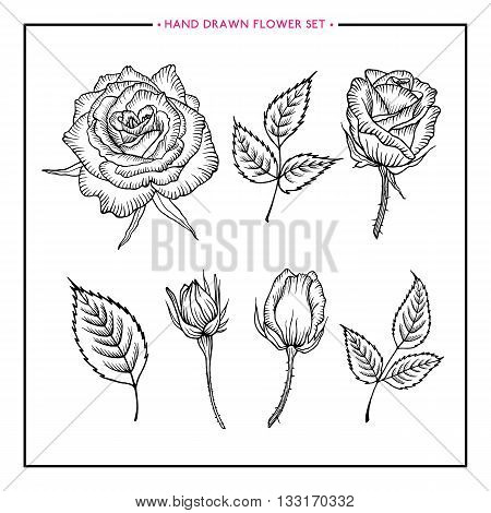 Flower set rose. Hand drawn rose. Rose sketch. Flower rose design for wedding, birthday, greeting card, web, printing, flower shop