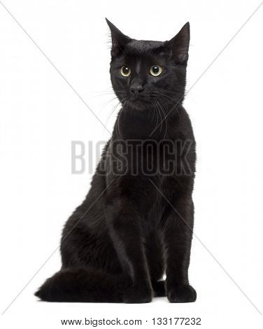 European cat looking away and sitting, isolated on white