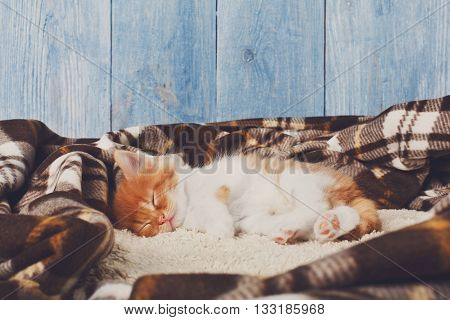 Ginger kitten with white chest. Long haired red orange kitten sleep at plaid blanket. Sweet adorable kitten on a serenity blue wood background. Small cat with toy ball. Funny kitten