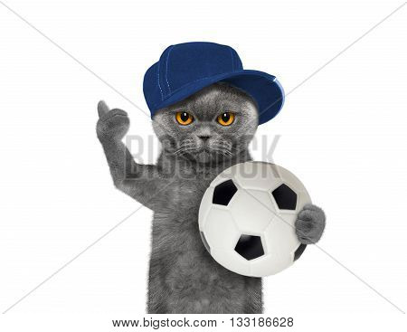 Cat in cap with a ball -- isolated on white background