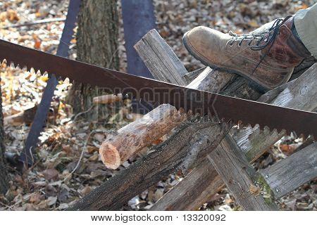 crosscut saw cutting log