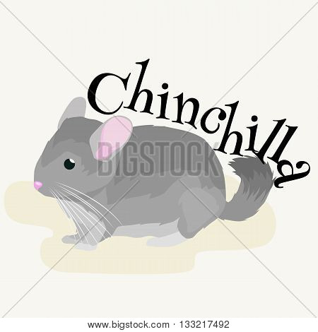 Pets, Gray chinchilla, domestic animals vector illustration on a white background