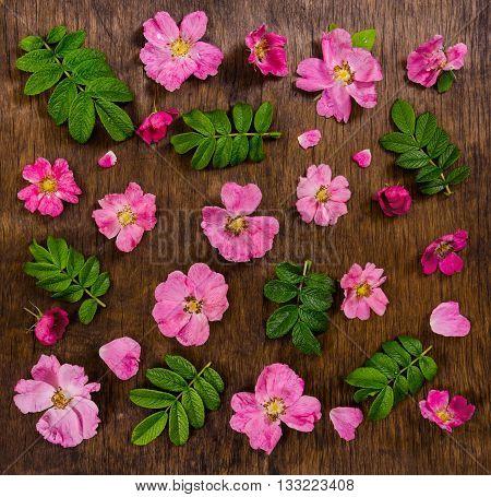 Pink Flowers On Dark Rustic Wooden Background.