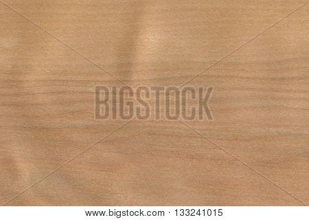 Birch- white (Betula alleghaniensis) North America wood background texture