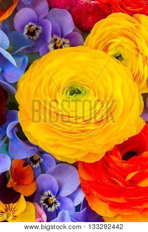 Fresh Colorful Flowers Background - ranunculus, pansies and hortensia