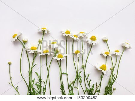 Pattern with chamomile flowers on white background. Flat lay top view