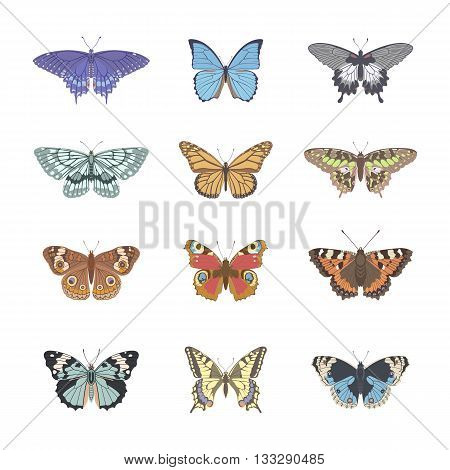 Set of realistic tenderness butterflies. Butterfly isolated on white background. Colorful pastel butterfly. Vector illustration