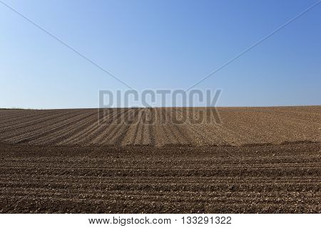 Chalky Potato Field