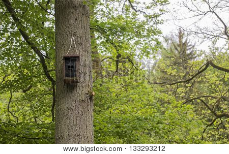 birdhouse on the pine tree. Germany. 2016
