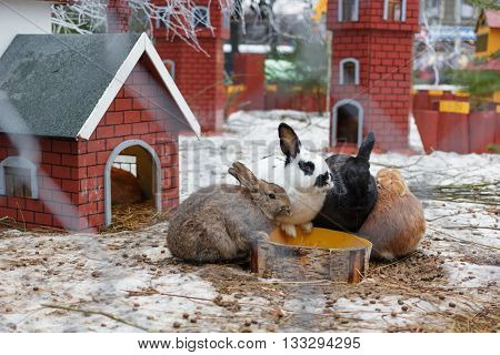 Rabbits are sitting at the trough in the paddock.  Toy house and castle in the background